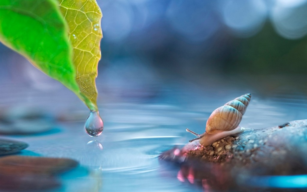 snail background wallpapers
