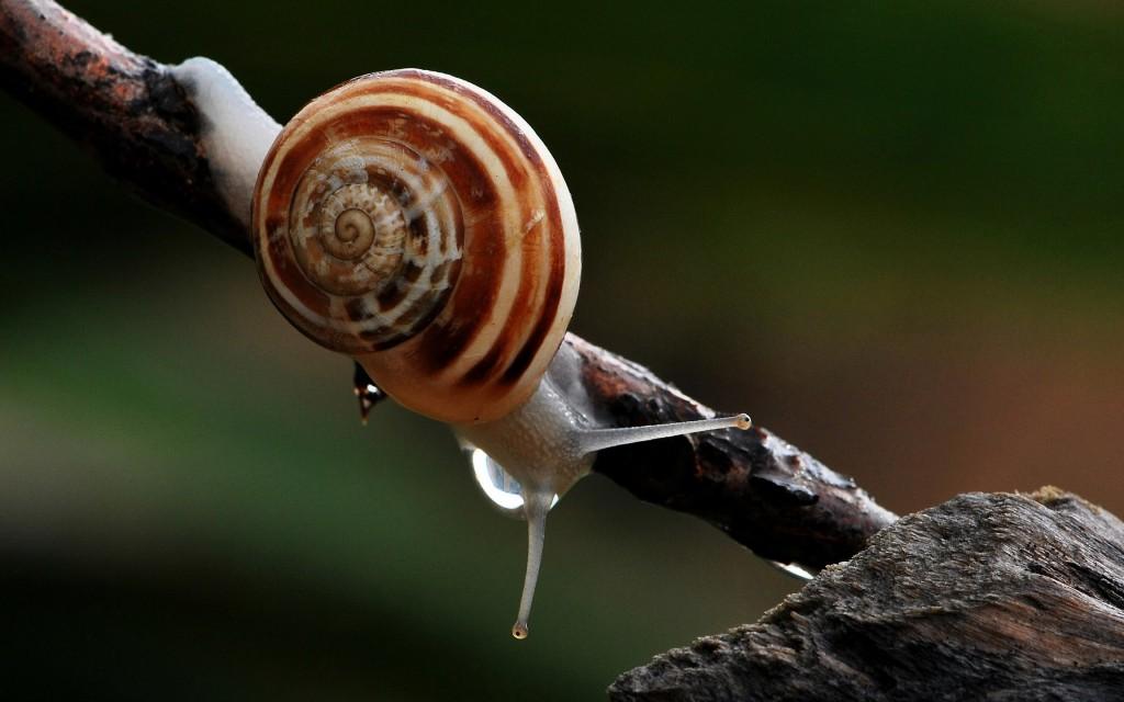 snail widescreen wallpapers