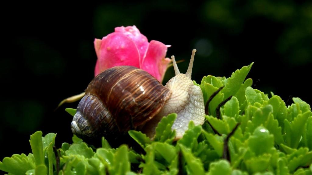 snail-widescreen-wallpaper-51245-52941-hd-wallpapers