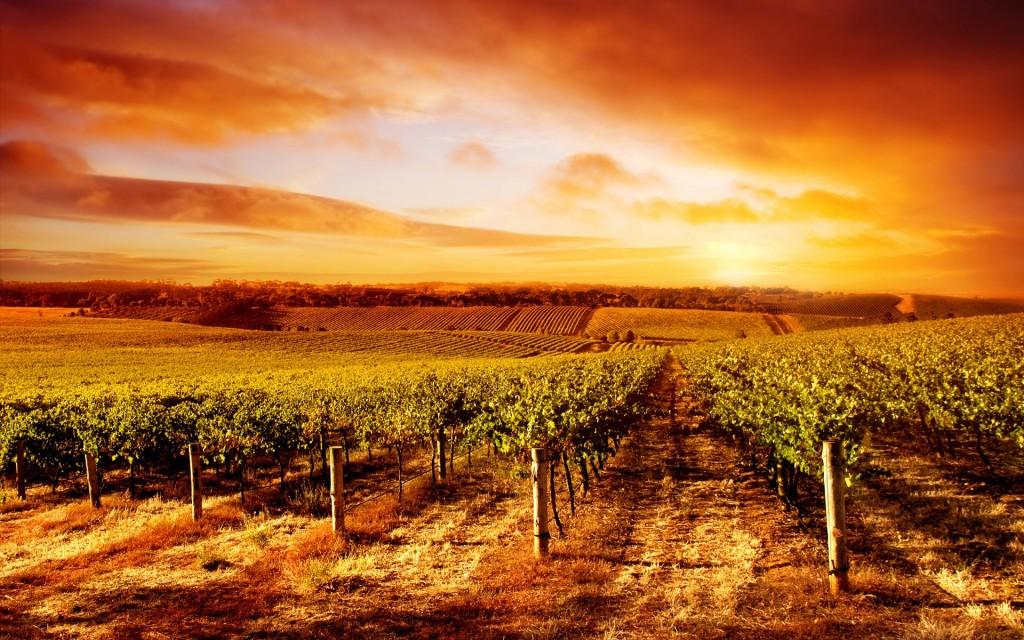 vineyard-26367-27058-hd-wallpapers