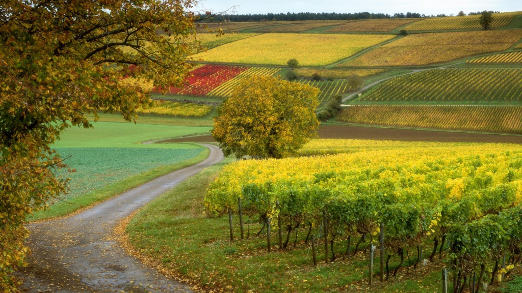 vineyard desktop wallpapers
