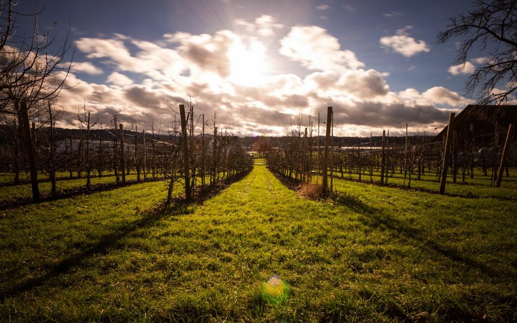 vineyard hd wallpapers