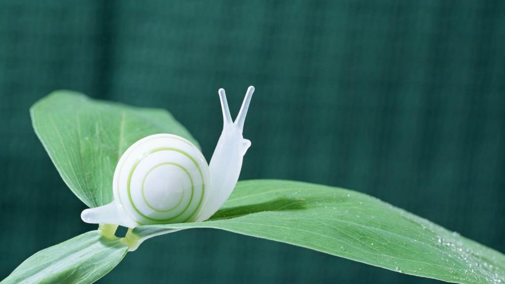 white snail wallpapers