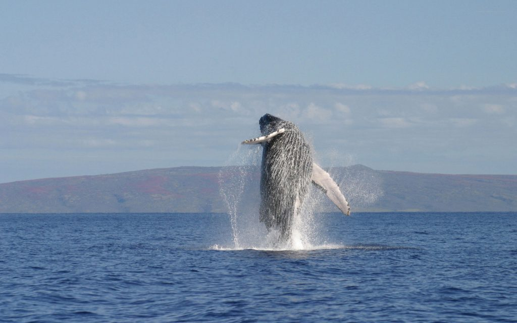 amazing whale wallpapers