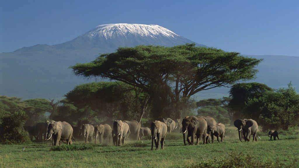 elephant herd wallpapers