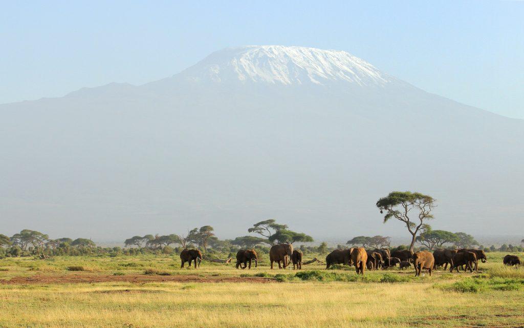 elephant herd widescreen wallpapers