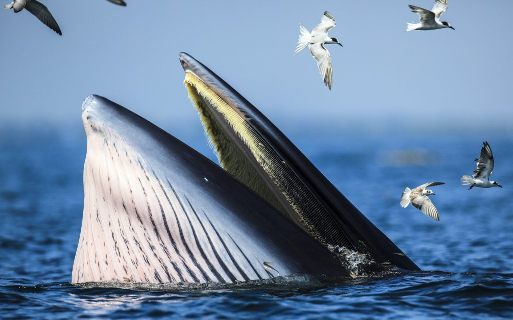 whale animal hd wallpapers
