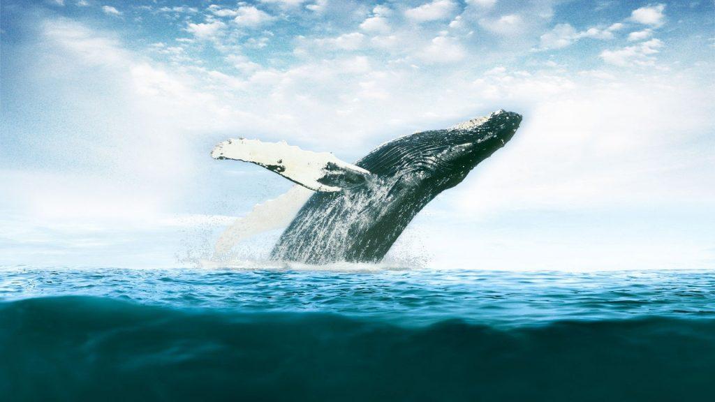 whale desktop wallpapers