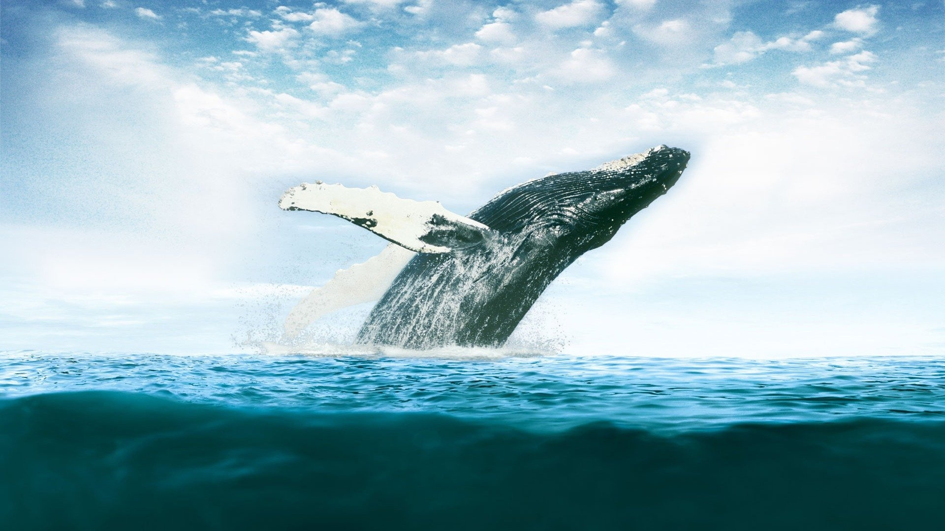 30 Fantastic Hd Whale Wallpapers