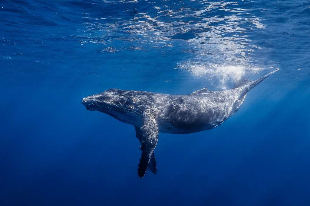 whales wallpapers
