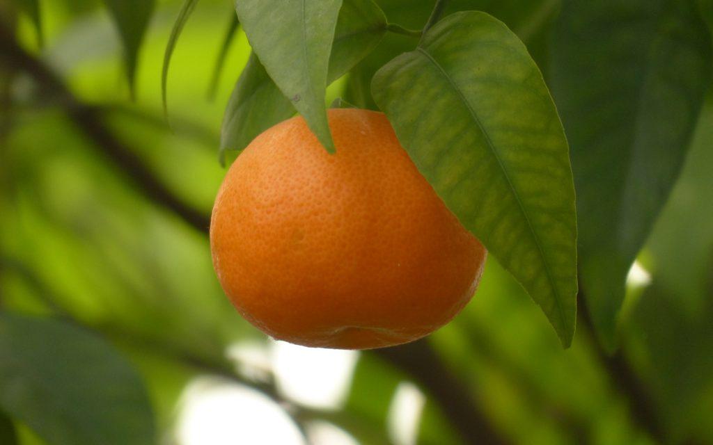 mandarin orange widescreen wallpapers