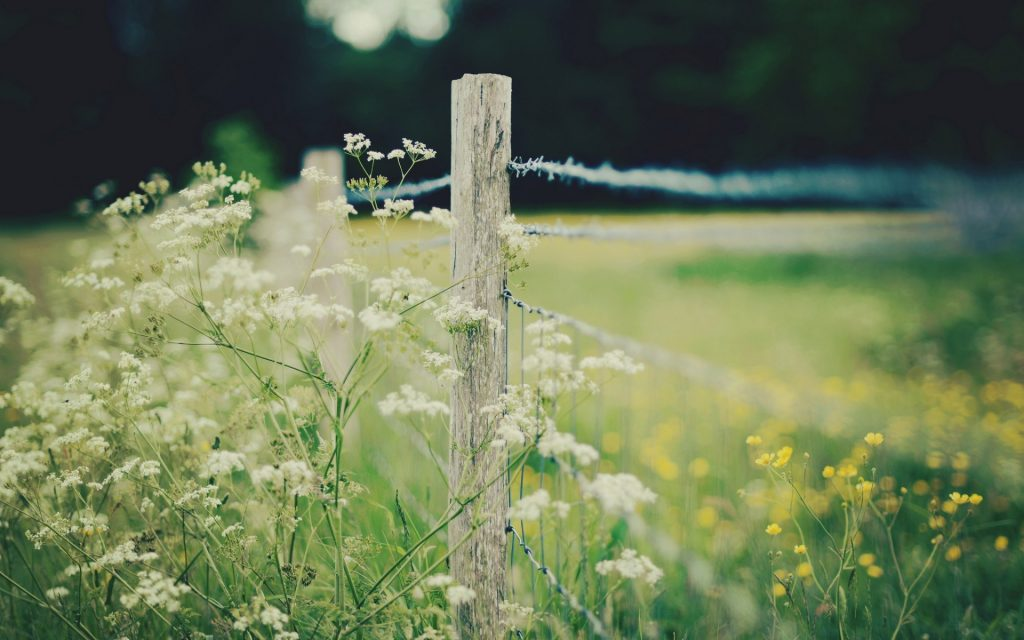 nature barbed wire fence wallpapers